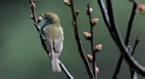 Turismo ornitológico en Galicia