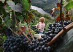 Vineyards abound on the sunny hillsides