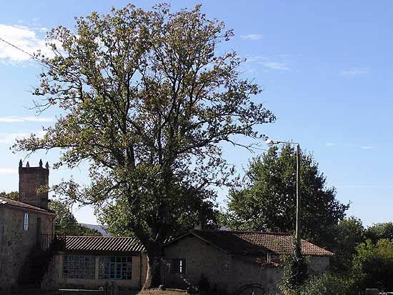 Turismo rural a parada das bestas ii en palas de rei lugo galicia - Casa rural palas de rei ...