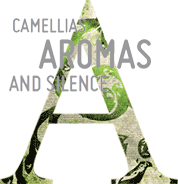 Camellias, aromas and silence...