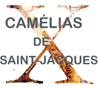 Camelias xacobeas